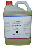 CT BORONIA DISINFECTANT  5L